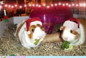 Merry pig-mas