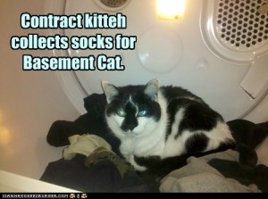 contract kitteh