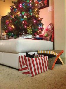 kitty-present