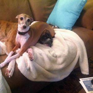 Lousie (italian greyhound), Rocky (boxer)