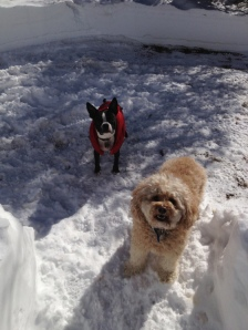 Otto and a buddy on snow day