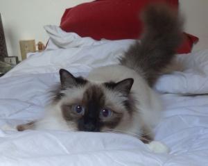 cat named Gwash