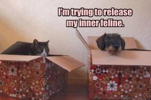 my inner feline